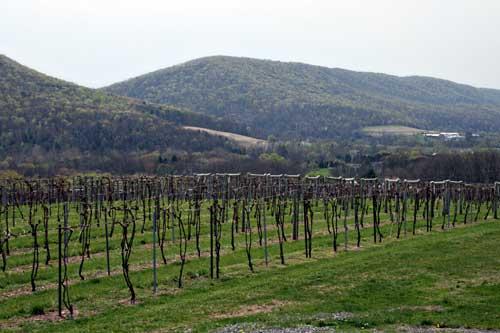 benignas creek winery