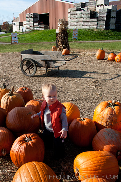 pumpkinpatch02