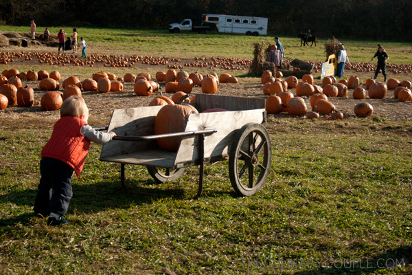 pumpkinpatch06