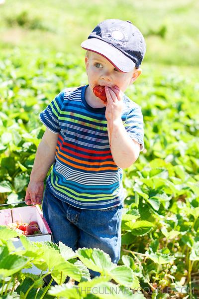 strawberries5